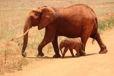 elephant-175798_640